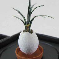 Jap plants 2-min