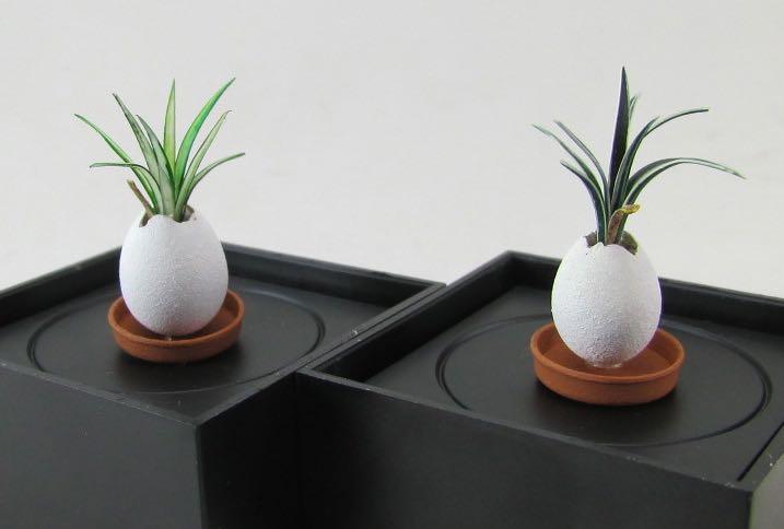 Jap plants-min