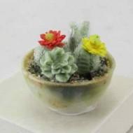 cactus-min