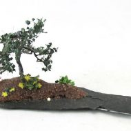 MF Bonsai 4-min